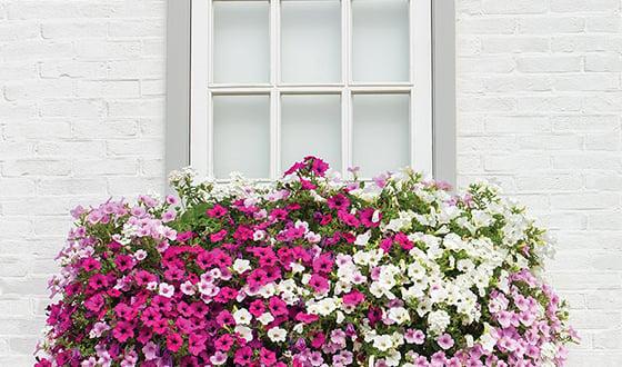 outdooor window box